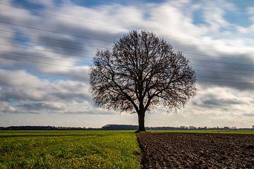 Einsamer Baum von Charelle Roeda