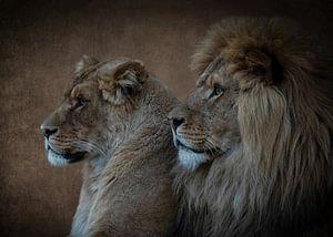 Löwen: Porträt eines Löwen und einer Löwin in Brauntönen von Marjolein van Middelkoop