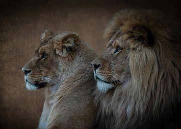 Löwen: Porträt eines Löwen und einer Löwin in Brauntönen