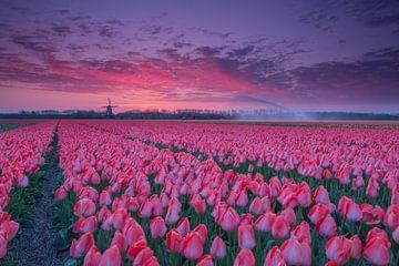 Zonsopkomst over de tulpenvelden van Willeke Bijker