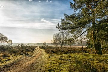 Heide bij Crailo van Pascal Raymond Dorland