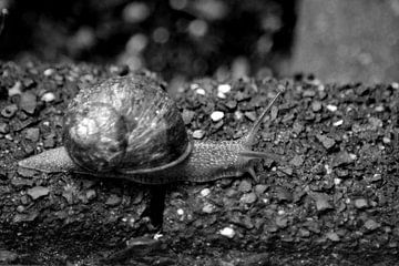 Slak (Zwart Wit) van FotoGraaG Hanneke
