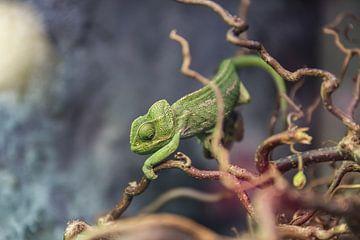 Kameleon van Jessica Blokland van Diën