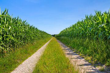 Maisfelder getrennt durch eine gerade Sandstraße von Ben Schonewille