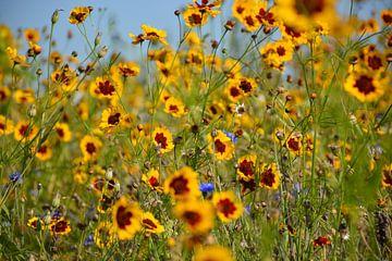 gele bloemen Assen van Henriette Tischler van Sleen