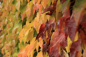 Herfst bladerenmuur van Carin van der Aa