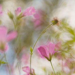 Monet in the field von