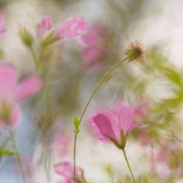 Monet in het veld van Carol Thoelen
