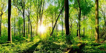 Frühling im Wald bei strahlendem Sonnenschein von Günter Albers