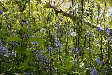 'Boeket' Wilde Hyacinten en Pluizenbollen van FotoGraaG Hanneke