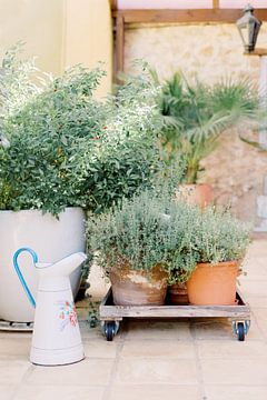 Kruidentuin in potten | Botanisch pastel stilleven in Portugal van Milou van Ham