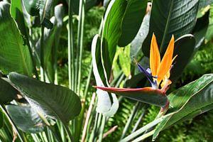 Bloem van de papegaaiplant van StudioMaria.nl