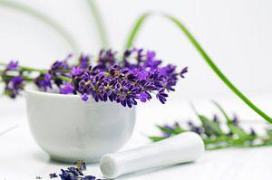 Lavendel Stillleben für die Praxis