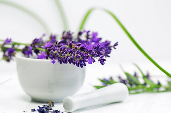 Lavender herb in the kitchen