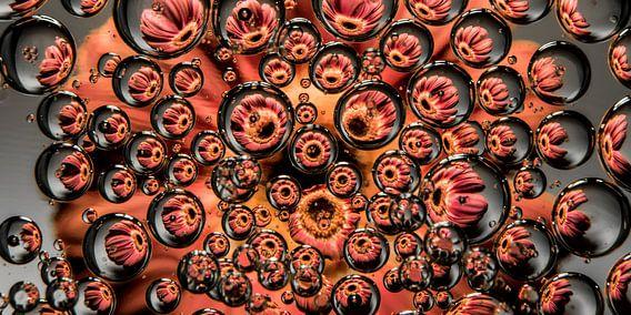panorama van een roze gerbera in druppels