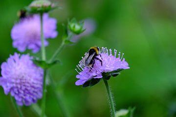 Bienen und blumen sur Myrte Wilms