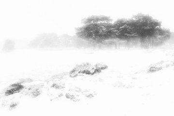 Een mooie winter ochtend op het Balloërveld in Drenthe. Sneeuw bedekt de bomen en de mist geeft een  van Bas Meelker