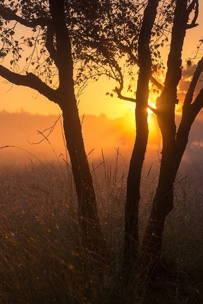 Strabrechtse Heide 251 von Desh amer