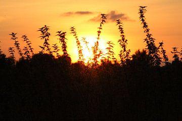 Brandnetels bij een zonsondergang van Geert Visser