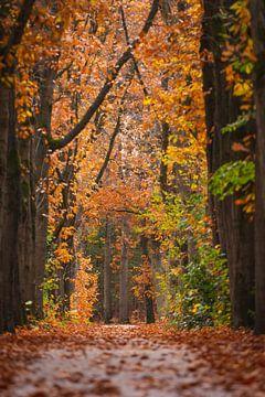 Herbst Oisterwijkse Bossen von Ronne Vinkx
