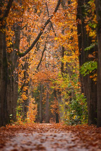 Herfst Oisterwijkse Bossen van Ronne Vinkx