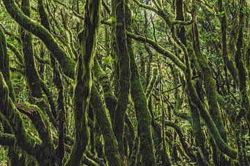 La forêt poilue sur Joris Pannemans - Loris Photography