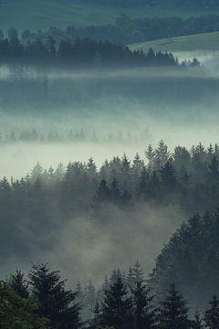 Beierse Woud in de Mist van Tobias Luxberg