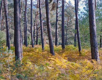 Wald von Erwin Zeemering