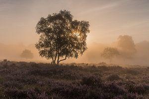 Mist rond de zonsopkomst op de Westerheide 2 van Jeroen de Jongh