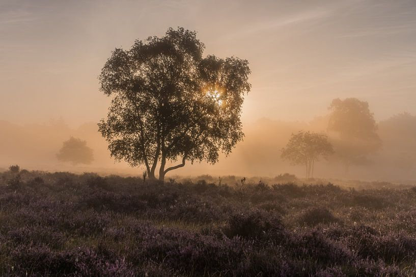 Nebel bei Sonnenaufgang auf der Westerheide 2 von Jeroen de Jongh
