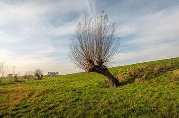 Schiefe Kopfweide in einer niederländischen Polderlandschaft von Ruud Morijn