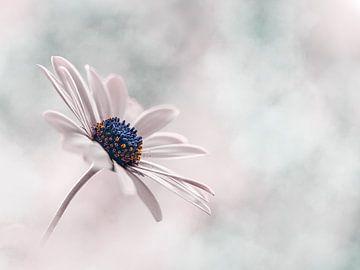 Zarte rosa und blaue Blume