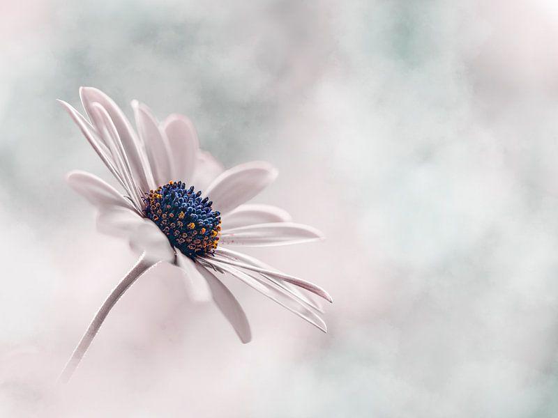 Zarte rosa und blaue Blume von Kyle van Bavel