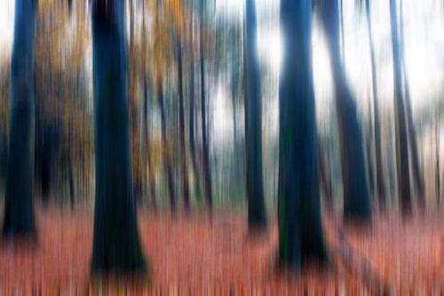 Moving Forrest von J.P. Valentine