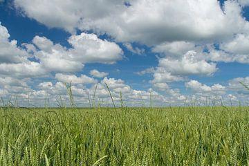 Landschap van wolkenvelden en graanveld van Marianne Jonkman