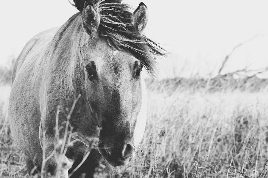 Wild paard in Oostvaardersplassen van Kimberley Jekel