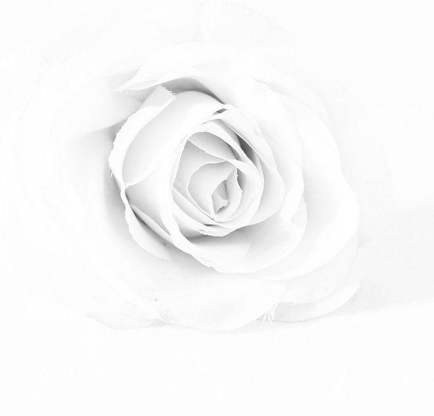 roos van E.M Hak