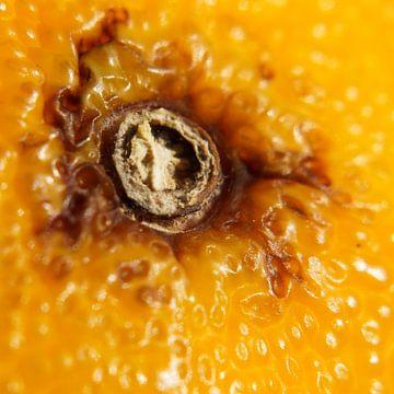 schil mandarijn van E.M Hak