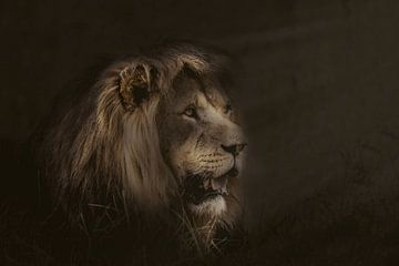 De Leeuw. ( katachtige ) van Monica Zimmermans