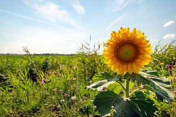 Grote zonnebloem van dichtbij van Ruud Morijn