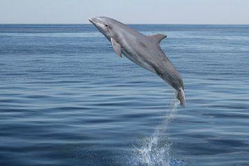 Der springende Delphin von Heike Hultsch
