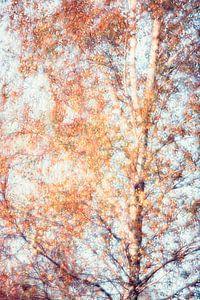 Birke im Herbst