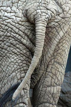 Achterwerk van een olifant van Jolanta Mayerberg