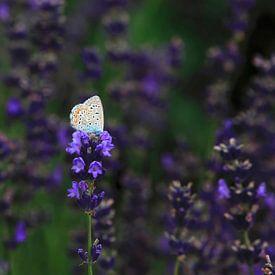 Lavendel van Thomas Jäger