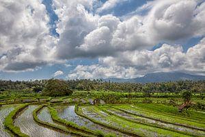 panorama van rijstterrassen in de bergen. Bali. Indonesië