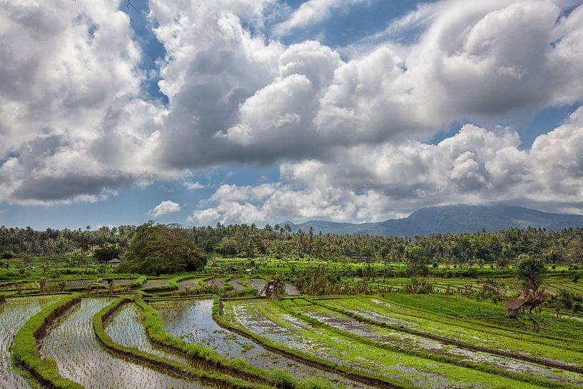 panorama van rijstterrassen in de bergen. Bali. Indonesië van Tjeerd Kruse