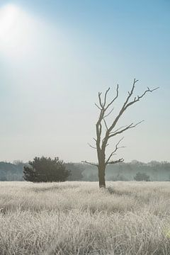Einsamer Baum auf der Heide in der Kampina von Ruud Engels