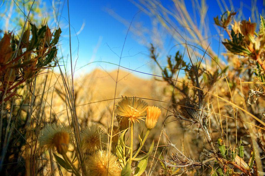 Naukluft Flora van BL Photography