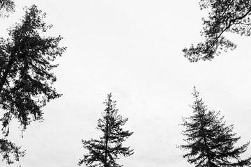 Berühre den Himmel! von Ellen Middelkoop