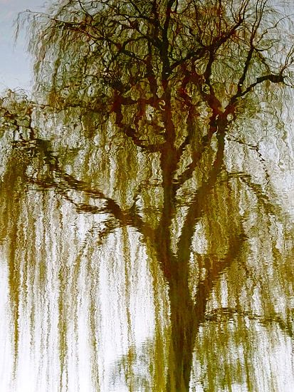 Tree Magic 73